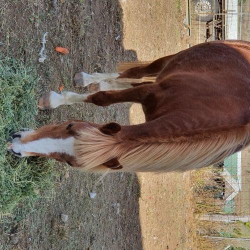 Girly -  Horse