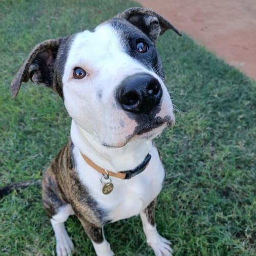 Patza - Mixed Breed Dog