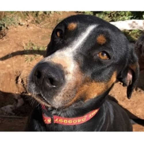 Bindi  - Mixed Breed Dog