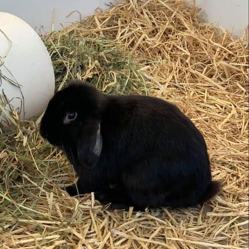 Burt -  Rabbit