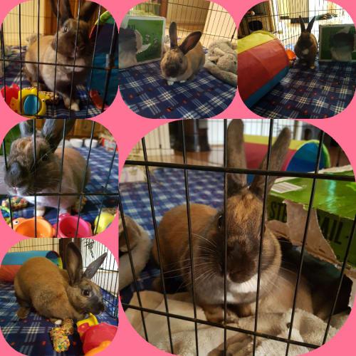 Soxy -  Rabbit