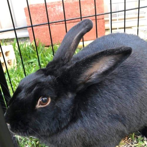 Missy  -  Rabbit