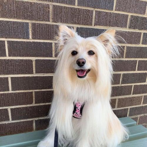 Kiko - Mixed Breed Dog