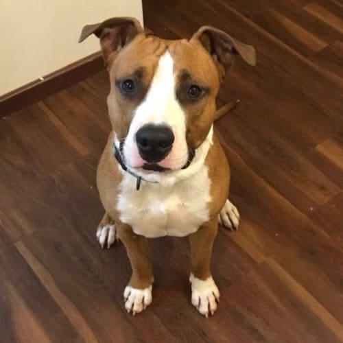 Wilson - Mixed Breed Dog