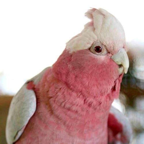 Karen -  Bird