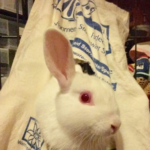 Gizmo -  Rabbit