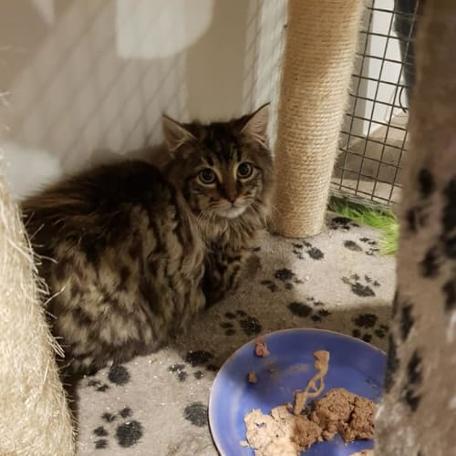 Jay **2nd Chance Cat Rescue**