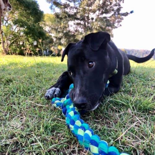 Winston - Mixed Breed Dog