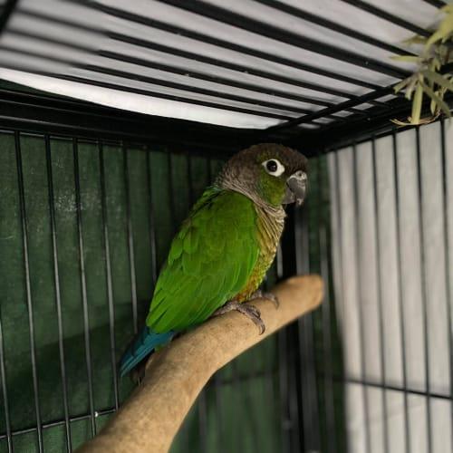 Basil -  Bird