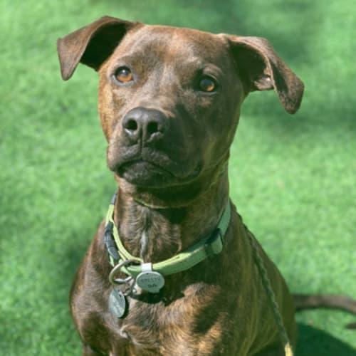 Lola - Cross breed Dog