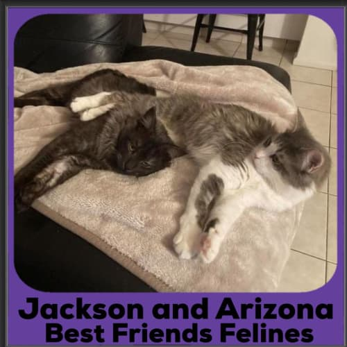 Jackson and Arizona  - Manx Cat