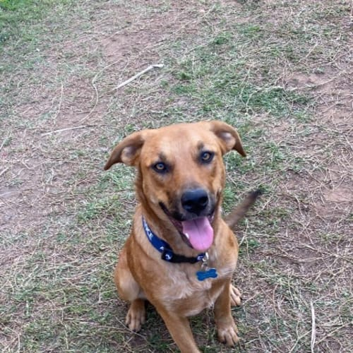 Lacey - Mixed Breed Dog