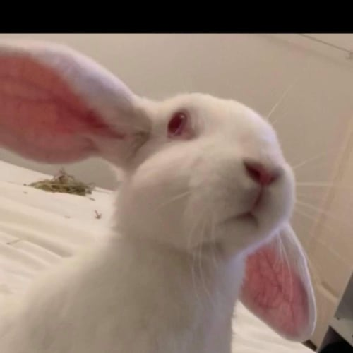 Dott -  Rabbit
