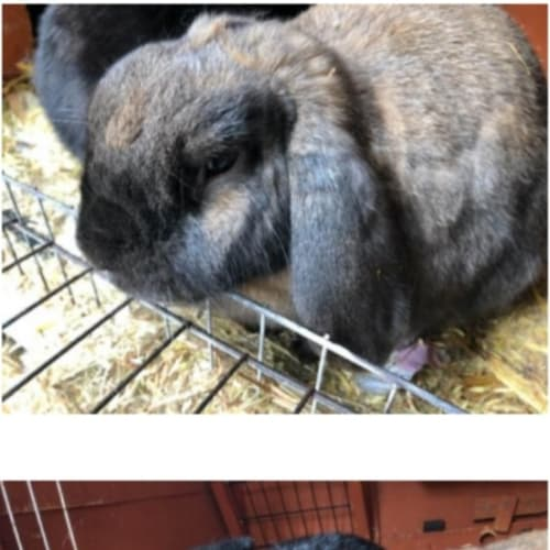Perry and Marlee -  Rabbit