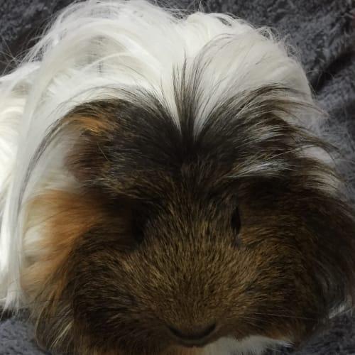 Elvis Pigsley