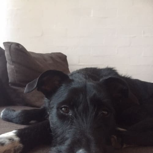 Jolene - Mixed Breed Dog