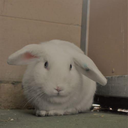 Rabunzel - Rabbit   Unspecified Rabbit