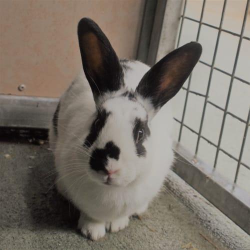 Joyce  - Rabbit   Unspecified Rabbit