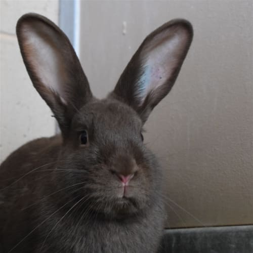 Jana - Rabbit   Unspecified Rabbit