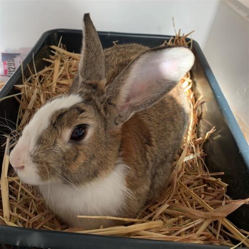 Herbert - Unknown Rabbit