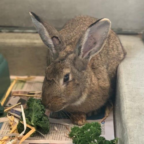 Kylie Bunner - Bunny Rabbit
