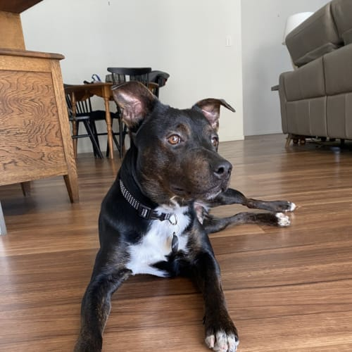 D572 Digby - Mixed Breed Dog