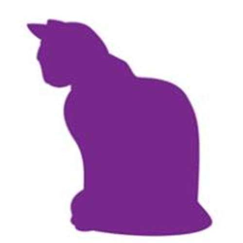 Missie - Domestic Short Hair Cat