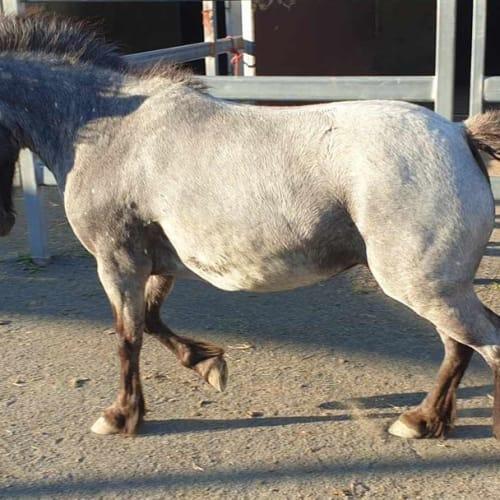 Sophie - Pony Horse