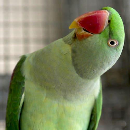 Jordan -  Bird