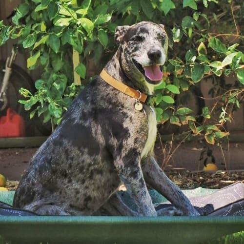 Mac - Mixed Breed Dog