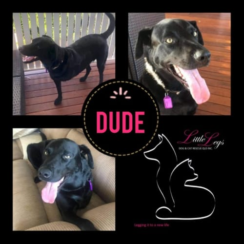 Dude - Mixed Breed Dog