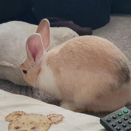 Bonnie - Flemish Giant x New Zealand White x Californian Rabbit