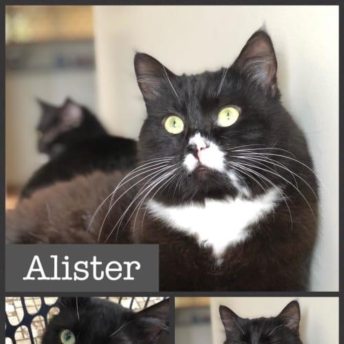 Alister