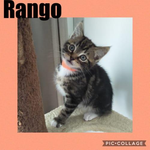 Rango