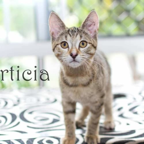 Morticia
