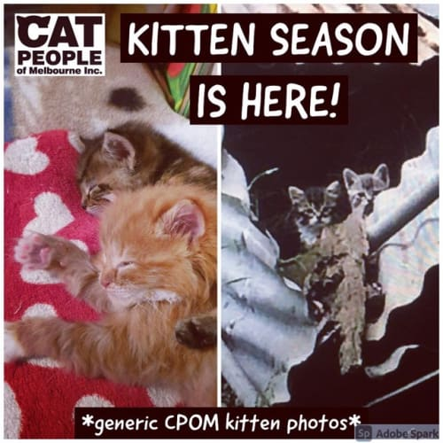 Cpom Present Purrfect Pairs!