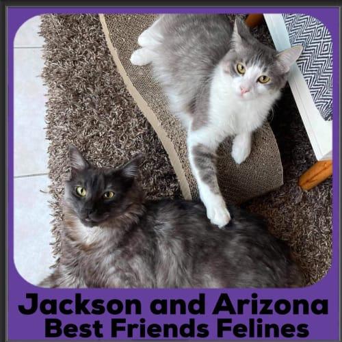Jackson and Arizona