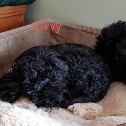 Livvy