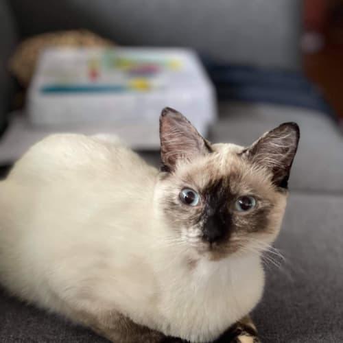 Lulu 💖