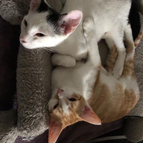 The Star Wars kittens!