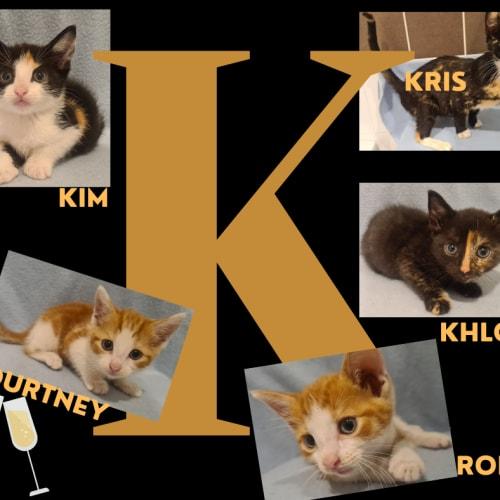 Kardashian momager and kittens!