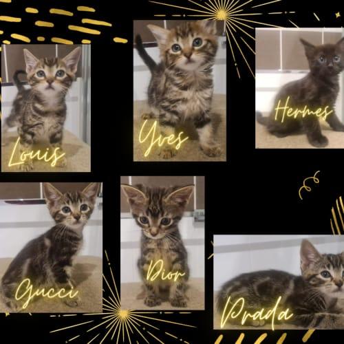 Classy Kittens