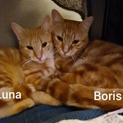 Boris & Luna