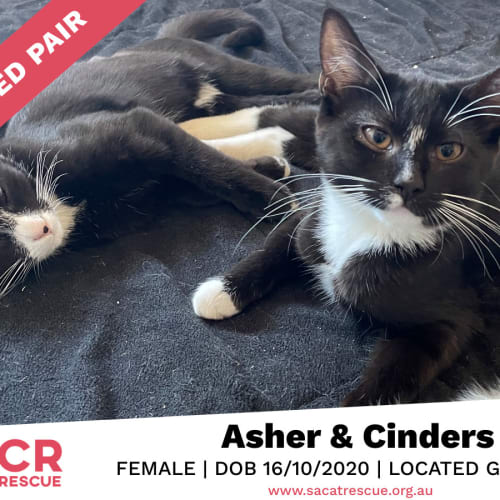 Asher & Cinders