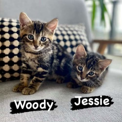 Jessie and Woody ❤❤