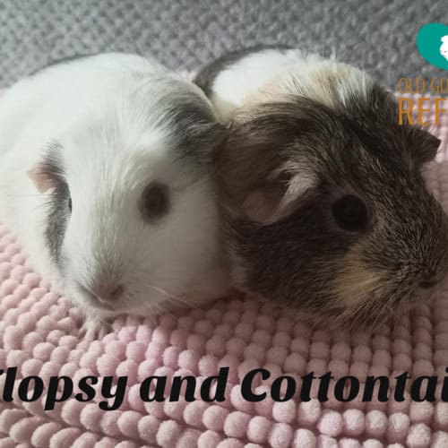 Flopsy and Cottontail