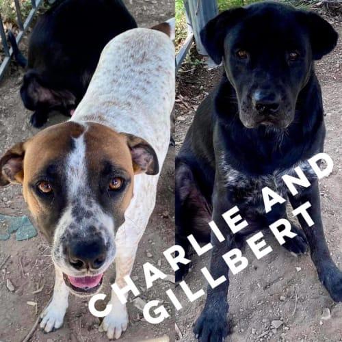 Charlie & Gillbert