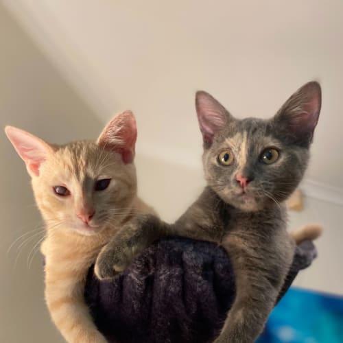 Myko & Millie