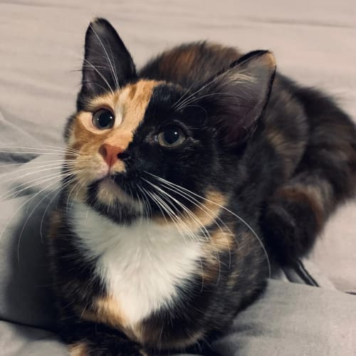 Bella 🐟