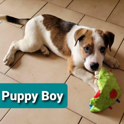 Puppy Boy